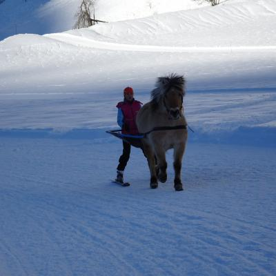 Ski joëring and horses activities