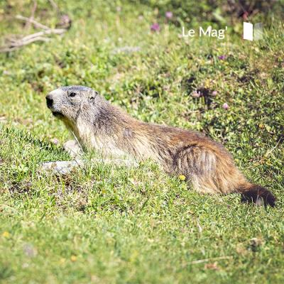 What animals can be seen in the Vanoise National Park?