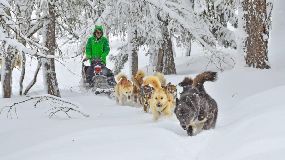 Husky Rides Montchavin Les Coches Sled Dog A Montchavin Les Coches
